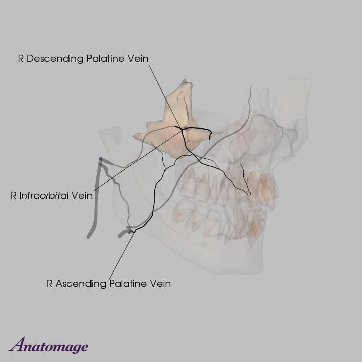 Dental Vasculature